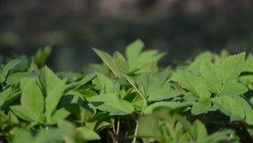 Pan Right Along de Groene Vegetatie stock videobeelden