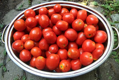 Pan of roma tomatoes. Large pan filled with Roma tomatoes, ready to be canned Stock Image