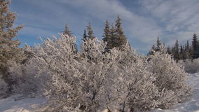 Pan scenic winter landscape. Video of pan scenic winter landscape stock footage