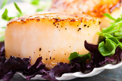 Pan Seared Scallop. With garnish on the half shell Royalty Free Stock Image