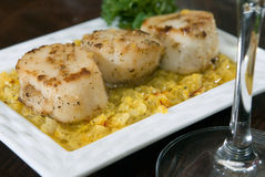 Pan seared scallops Stock Photography