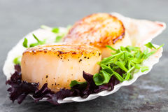 Pan Seared Scallops. With garnish on the half shell Royalty Free Stock Photo