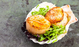 Pan Seared Scallops on a Half Shell. Pan seared scallops with garnish on a stone plate Royalty Free Stock Images