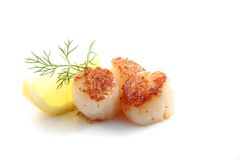 Pan seared scallops over white background. Royalty Free Stock Images
