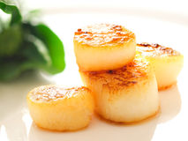 Pan seared sea scallops. Close up of pan seared sea scallops stock photos