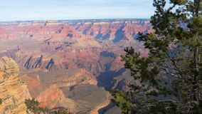 Pan Shot Bottom Up Grand Canyon In Sunny Day On Background Of Pine Tree 4K. Pan bottom up from the Grand Canyon national Park on Colorado river in Arizona, USA stock footage