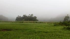 Pan Shot de pré ou de prairie vert dans le matin brumeux avant lever de soleil avec le brouillard couvrant la majeure partie de l banque de vidéos