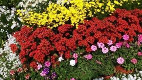 Pan shot of variety of flowers in plant nursery, Agra, Uttar Pradesh, India stock video footage