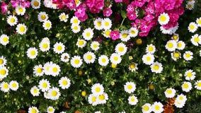 Pan shot of variety of flowers in plant nursery, Agra, Uttar Pradesh, India stock footage