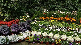 Pan shot of variety of flowers in plant nursery, Agra, Uttar Pradesh, India stock video