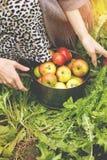 Pan van appelen Stock Afbeeldingen