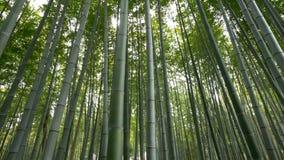 Pan van Bamboebos wordt geschoten, Arashiyama, Kyoto, Japan dat stock video