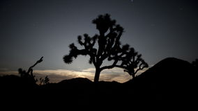 Pan van Joshua Tree bij Nacht stock footage