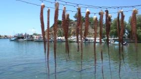 Pan van Pijlinktvis het drogen in limenariahaven Thassos Griekenland stock footage