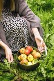 Pan von Äpfeln Lizenzfreies Stockfoto