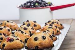 Pan von frischen ausgewählten Beeren und von Muffins Stockbilder