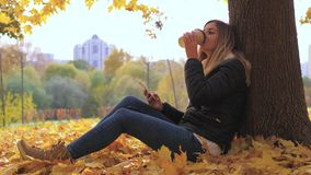 Pan Woman Sitting Near Tree In Yellow Fall Leaves, Uses Apps And Drinking Coffee. Panorama bottom up joyful young attractive woman sitting near the tree on stock footage