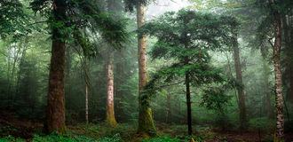 Pan in the woods Royalty Free Stock Photo