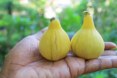Panache figs fruits in hand. stock photo