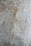 Panaeolus champinjon Royaltyfri Bild