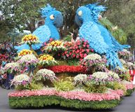 Birds on float of flowers royalty free stock images