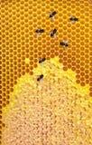 Panal con el fondo de las abejas Fotos de archivo