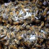 Panal con la colmena de la abeja, apicultura de Vietnam Fotografía de archivo libre de regalías