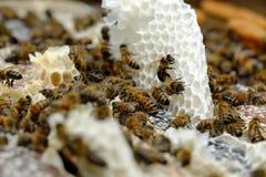 Panal con la colmena de la abeja, apicultura de Vietnam Imagen de archivo libre de regalías