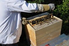 Panal con la colmena y el apicultor Fotos de archivo libres de regalías