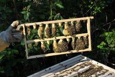 Panal con la colmena y el apicultor Fotografía de archivo