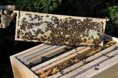 Panal con la colmena y el apicultor Foto de archivo