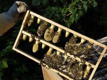 Panal con la colmena y el apicultor Imagenes de archivo