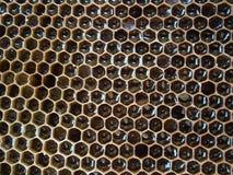 Panal con la miel Foto de archivo