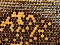 Panal con la miel Fotos de archivo