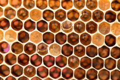 Panal con la miel dulce Imagen de archivo
