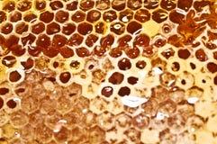 Panal con la miel en primer Fotos de archivo libres de regalías