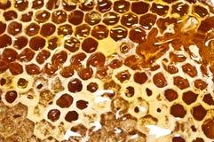 Panal con la miel en primer Imagen de archivo libre de regalías