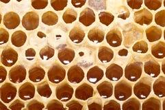 Panal con la miel en primer Imagenes de archivo