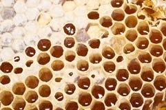 Panal con la miel en primer Foto de archivo libre de regalías