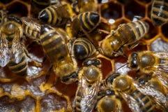 Panal con las abejas Fotos de archivo