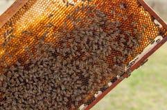 Panal con las abejas contra luz del sol Imagenes de archivo