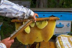 Panal con las abejas y la apicultura del apicultor de la miel Foto de archivo