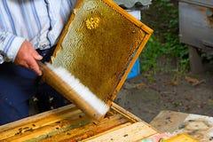 Panal con las abejas y la apicultura del apicultor de la miel Fotos de archivo libres de regalías