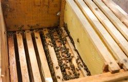 Panal con las abejas y la miel Fotos de archivo