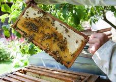 Panal con las abejas y la miel Imágenes de archivo libres de regalías