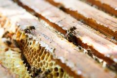 Panal con las abejas y la miel Imagen de archivo libre de regalías