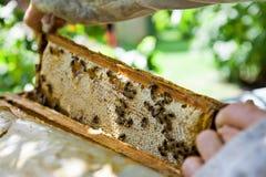 Panal con las abejas y la miel Imagen de archivo