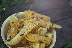 Panal con las abejas y la miel Apicultor en el colmenar Imágenes de archivo libres de regalías