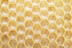 Panal con las larvas de la abeja Foto de archivo
