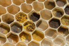 Panal con polen y la cera Fotos de archivo